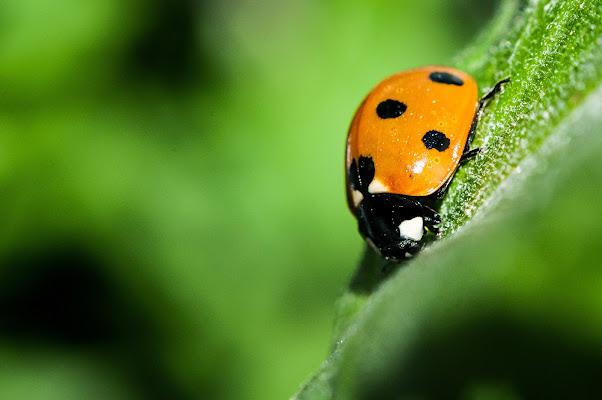 Ladybug di Icarus87