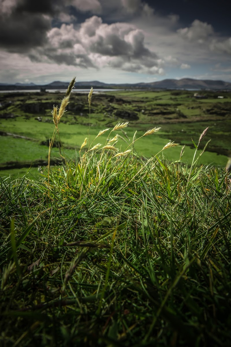 La primavera e i cieli d'Irlanda di AnUseless