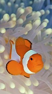 Ryby Klaun Živé Tapety - náhled