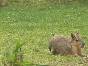Photo: indigenous mystery animal