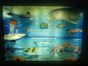 Photo: Žabža na exkurzi v podvodním světě