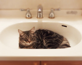 Photo: 洗面台がお気に入り…でもカメラを向けられて超不機嫌