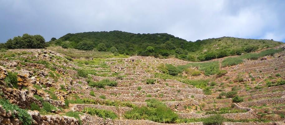 Muretti a secco di Pantelleria di annabus58