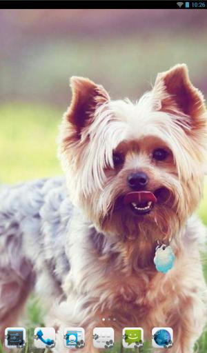 Yorkshire Terrier Theme - Nova