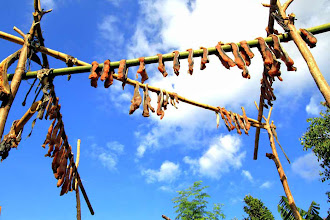 Photo: The meat of the captured whale is cut in pieces and dried. These are their commodities for barter in the local market. The villagers from the mountain would exchange a piece of whale meat with ten chunks of fresh cassavas. http://www.indonesia.travel