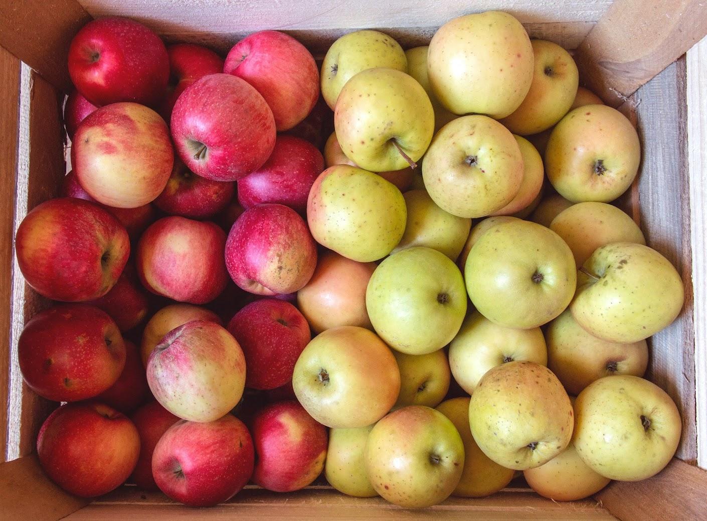 органические яблоки