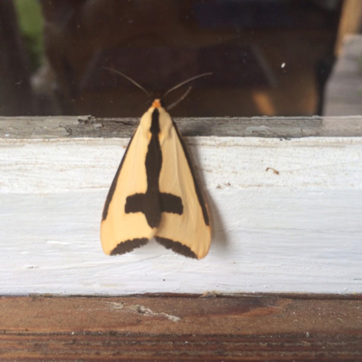 Clemene moth