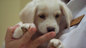 Puppies Behaving Badly thumbnail