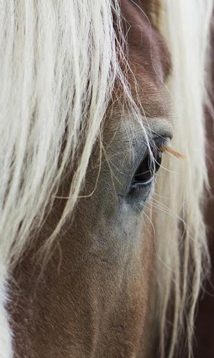 LWP 馬