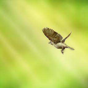 by Nordan Malabuyoc - Animals Birds