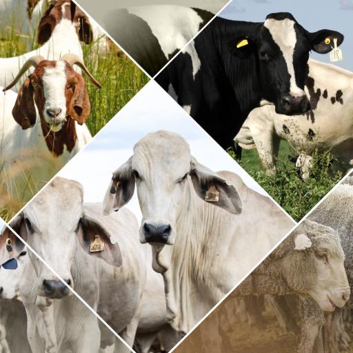 Veterinary Handbook - Apps on Google Play