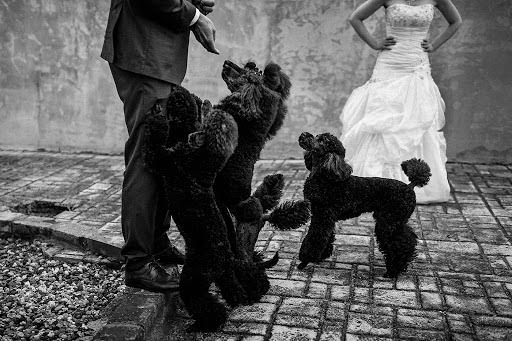 Wedding photographer Petr Wagenknecht (wagenknecht). Photo of 21.06.2020