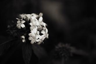 Photo: goodnight +FloralFriday+Monochrome Arty Club #blackandwhitephotography