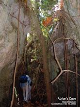 Photo: Adrian's Cave, edge of Ironwood Forest, Grand Cayman. Photo: Ann Stafford, Feb. 19, 2003