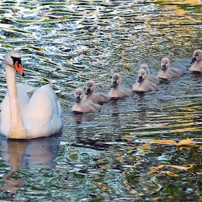 by Inger Wakolbinger - Animals Birds