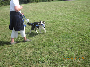 Photo: Galu Border Collie with Judy