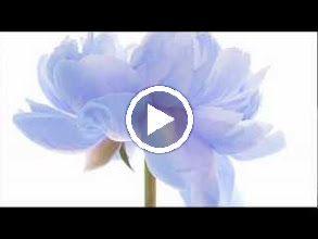 Video: A. Vivaldi  RV 480   Concerto for bassoon, strings   b.c. in C minor   I solisti italiani -