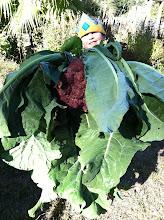 Photo: We have a cauliflower problem, Houston!