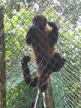 Photo: Woolly monkey