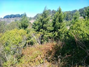 Photo: Redwood grove
