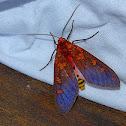 The moth at dawn