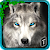 Ultimate Wolf Adventure 3D file APK for Gaming PC/PS3/PS4 Smart TV