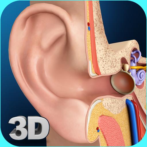 My Ear Anatomy Apps On Google Play