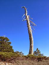 Photo: On the south ridge of Dawson Peak