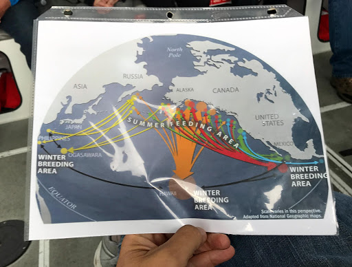 whale-feeding-areas.jpg - Liked this handy chart showing whales' migration patterns in summer and winter.