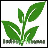 Budidaya Tanaman