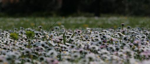 Photo: fiori