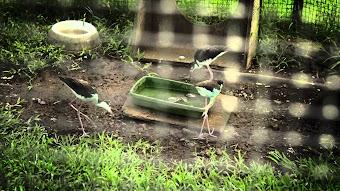 Animal Sanctuary/Snake Wrangler