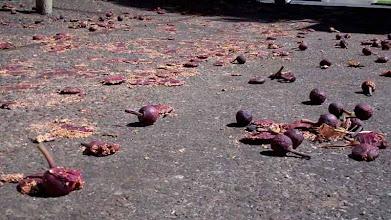 Photo: Figs litter a sidewalk in springtime Santa Barbara, March 3, 2012.