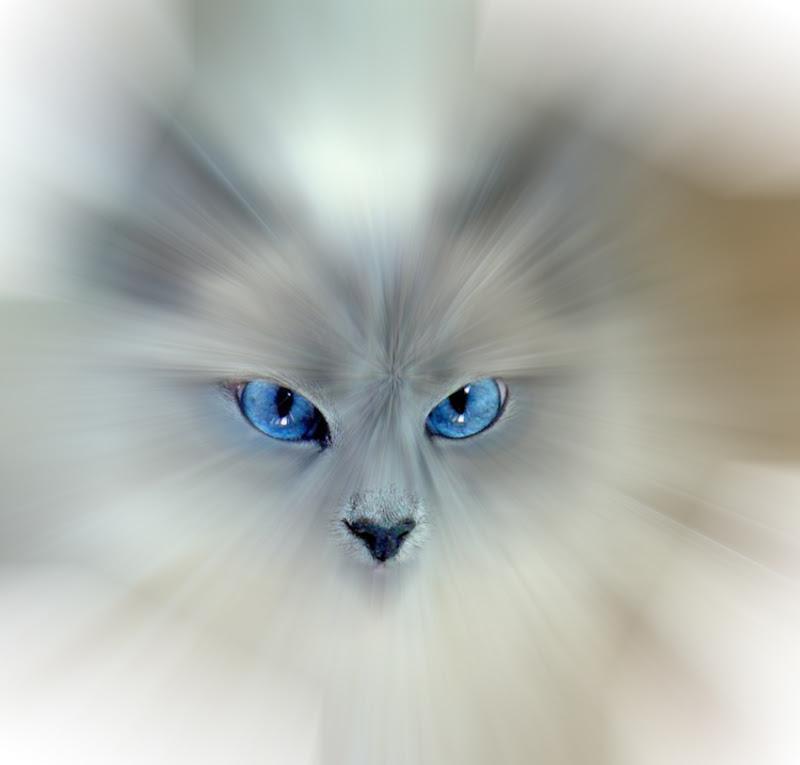 occhi... di mauriziosettimi