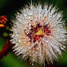 Wet seed head by David Winchester - Nature Up Close Flowers - 2011-2013 (  )