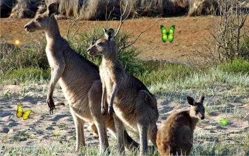 Wild Animals World - náhled