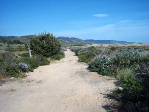 Photo: Dune trail, behind Limantour Beach