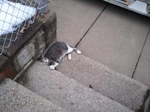 Photo: cat from Kitty's neighborhood