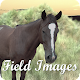 Field Images Download for PC Windows 10/8/7