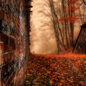 Autumn forest, road in the mist. by Morgentau ;) - Landscapes Forests ( brick wall, autumn leaves, colors, forest, road, morning, woods, photography, foggy, red, tree, nature, color, fog, autumn, trees, bricks, woodland, autumn colors, branches, wall, misty, mist,  )
