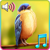 Birds Tweet Ringtones