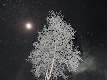 樹氷と朧月