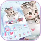 Lindo Gatito Tema wallpaper Cute Kitty lovely