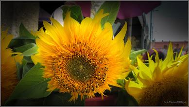 Photo: Floarea-soarelui (Helianthus annuus) - din Piata Centrala Agroalimentara - 2017.08.29
