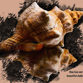 Shell of Life by Dave Walters - Typography Quotes & Sentences ( typography, nature, seashell, photoshop, colors )