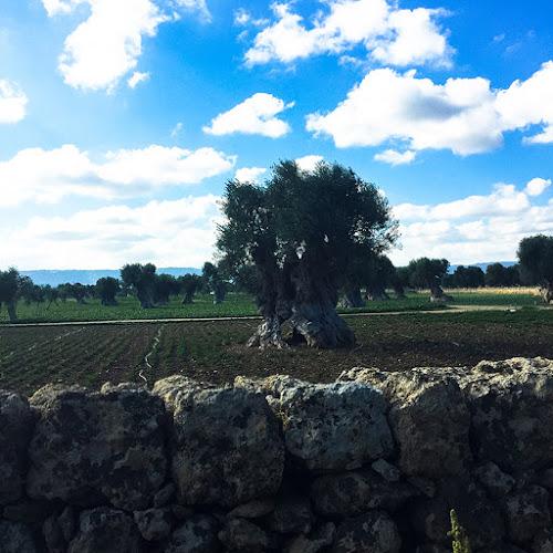 paesaggio agricolo di Puglia di Serenadellaguardia