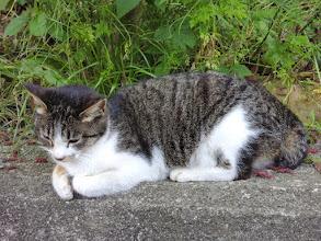 Photo: 猫1。