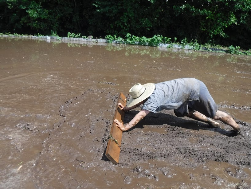 板を押して、高い方田んぼから低い方田んぼに土を移動する