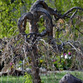 Unique by Jess Trudeau - Novices Only Flowers & Plants ( tree )