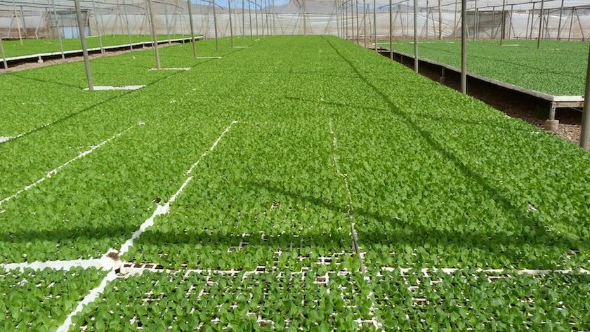 Las mejoras van dirigidas a incrementar la eficiencia y sostenibilidad del invernadero.